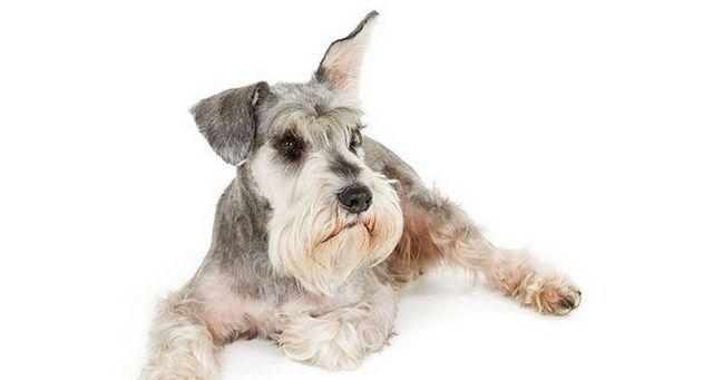 Los perros de servicio parte 1: problemas de audiciГіn