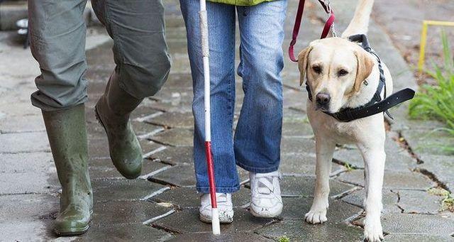 Los perros de servicio parte 3: los perros guГa
