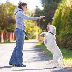 Una señora entrenando a su labrador que está arriba en sus patas traseras