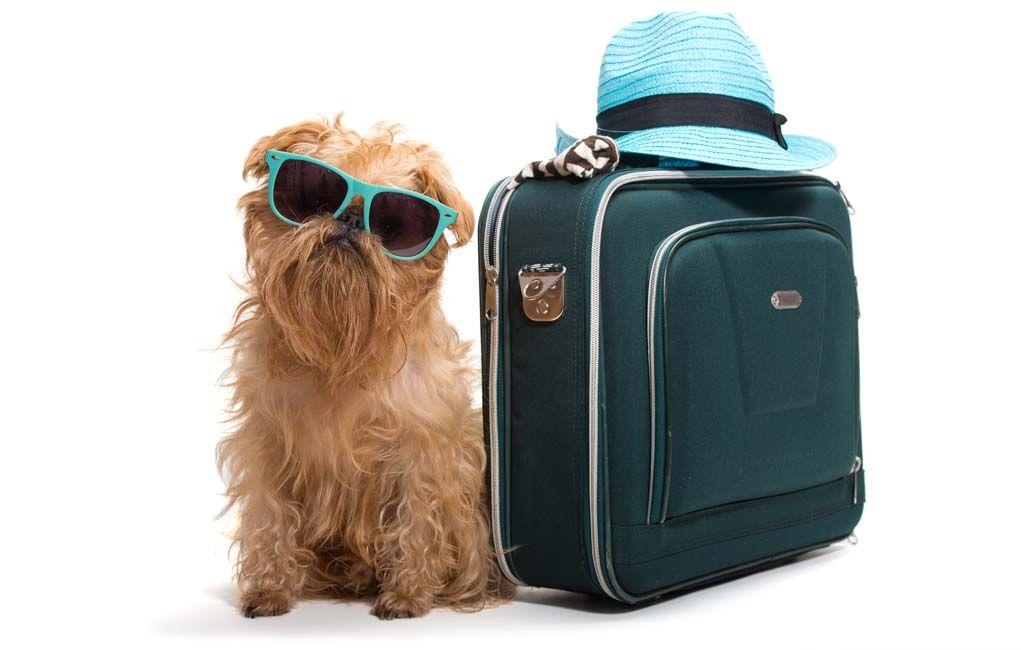 El envío de un perro - Planta vs Transporte Aéreo