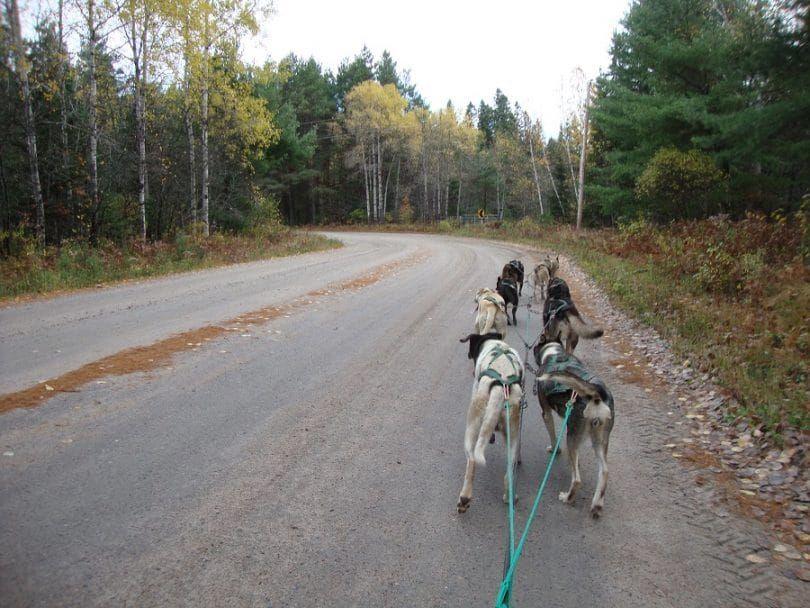 entrenamiento de perros de trineo