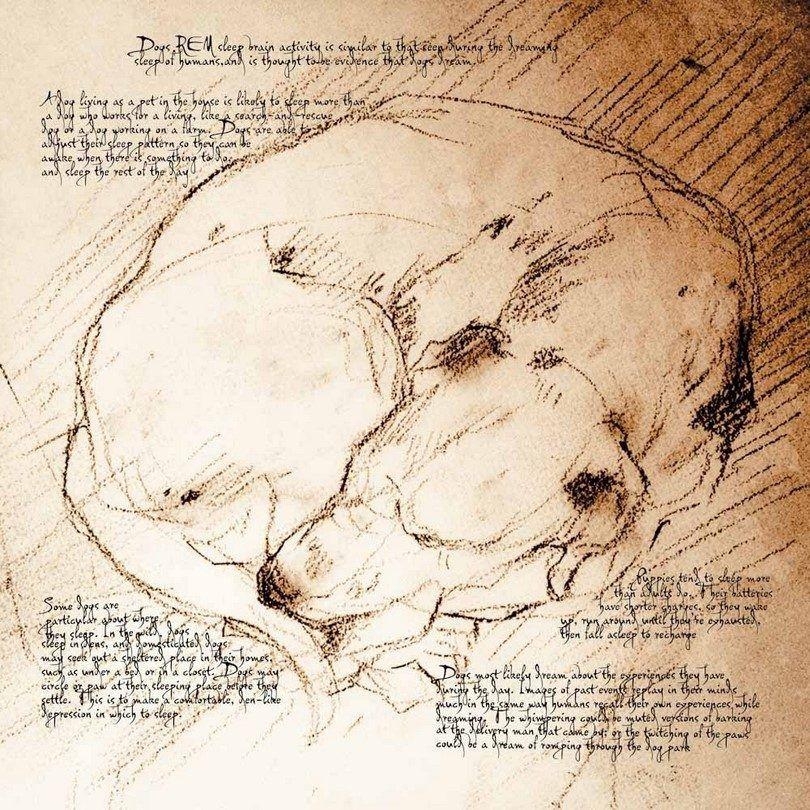fase REM del sueño del perro en