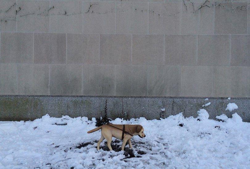 sonambulismo perro