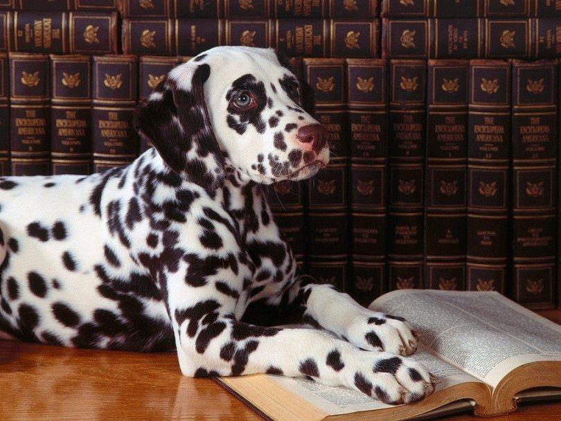 lectura inteligente perro