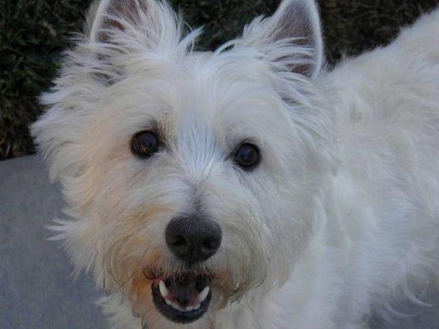 ¡Sonreír! ¿Cuál es la mejor pasta de dientes de perro en el mercado?