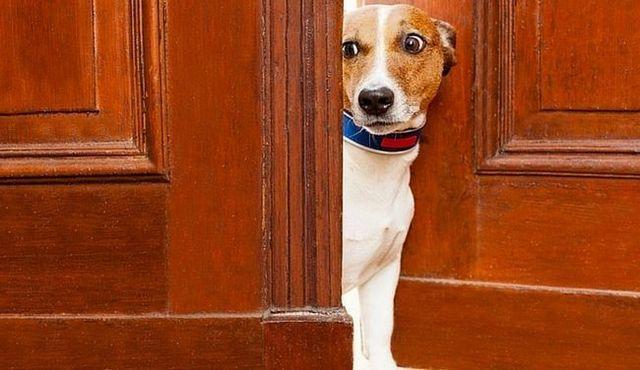 Calmar la bestia salvaje: la melatonina para perros