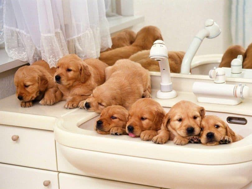 Una gran cantidad de cachorros en el baño