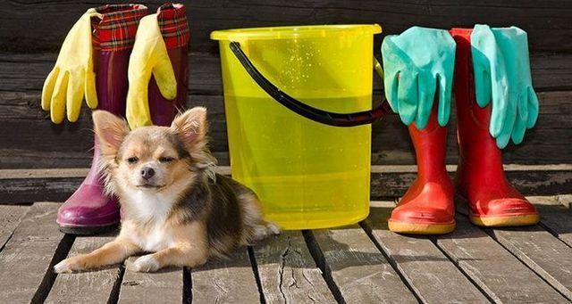 Extremidades de la limpieza de primavera para los dueños de perros