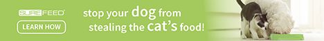 Detener su perro de robar comida de su gato!