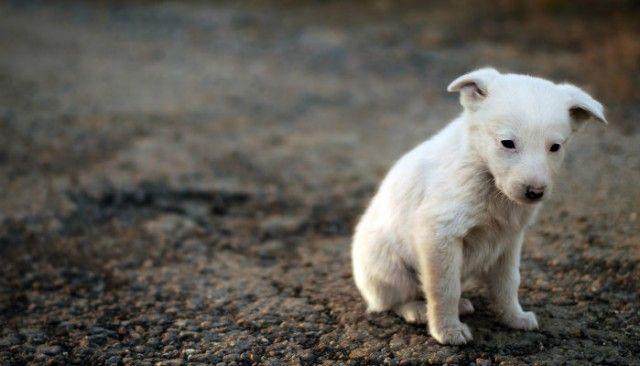 Los perros callejeros - ¿Es el Reino Unido sigue siendo una nación de los amantes del perro