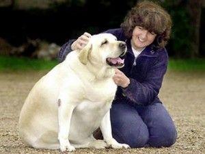 Estudiante aplicación desarrollada ayuda a mantener los perros sanos