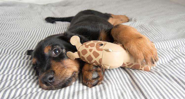 Ser selectivos con juguetes para perros