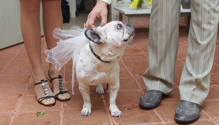 Incluyendo a su perro en su boda