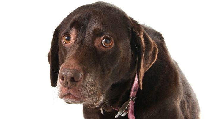 Enfermedades Salud Mental en los perros
