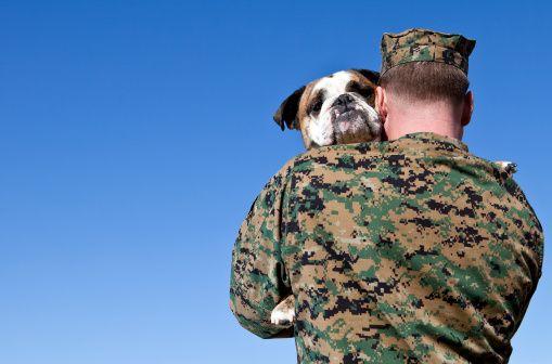 Apoye a nuestras tropas - abordando sus perros!