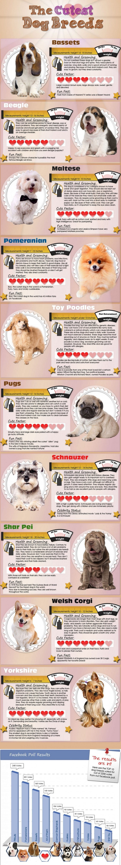 Las razas de perros más lindos