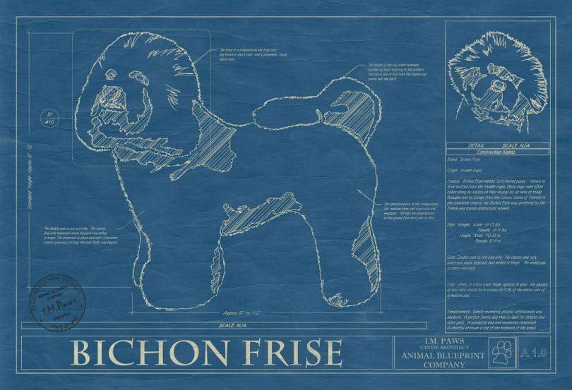 El Bichon Frise