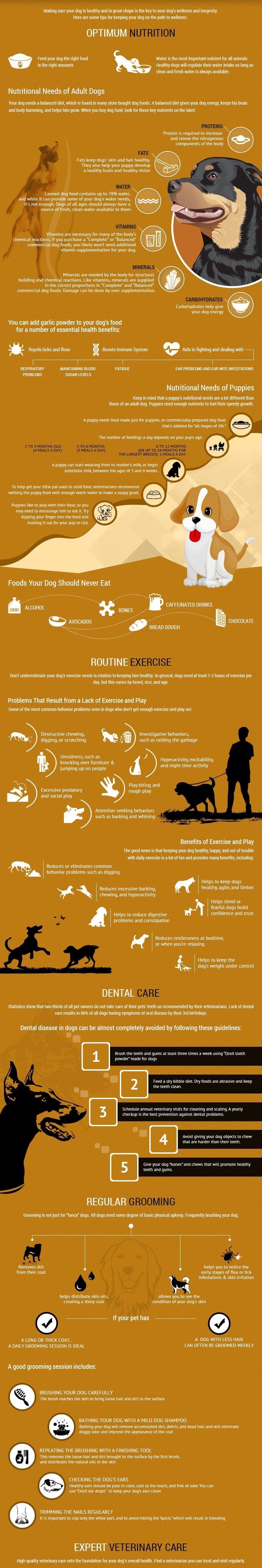 Cómo tratar a su perro para estar sano