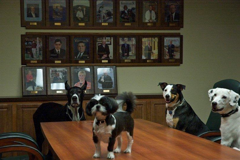 Los perros en la oficina