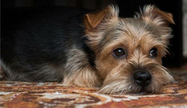 Historia de la cinta: lo peligroso que son las tenias en perros?