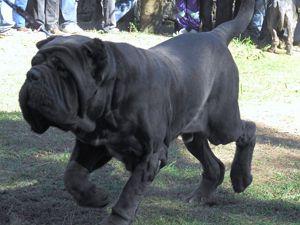 Las 10 razas de perros mГЎs inusuales