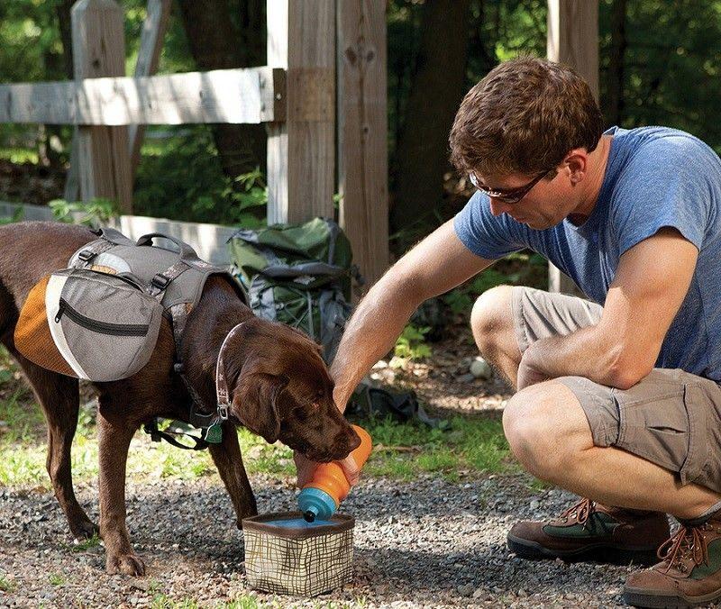 El cuidado de un perro y su mochila
