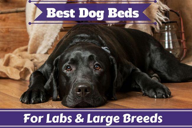 Las mejores camas para perros para laboratorios y grandes perros revisados