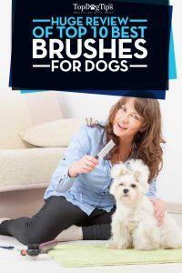 Top 10 - ВїCuГЎl es el mejor cepillo de perro para el aseo