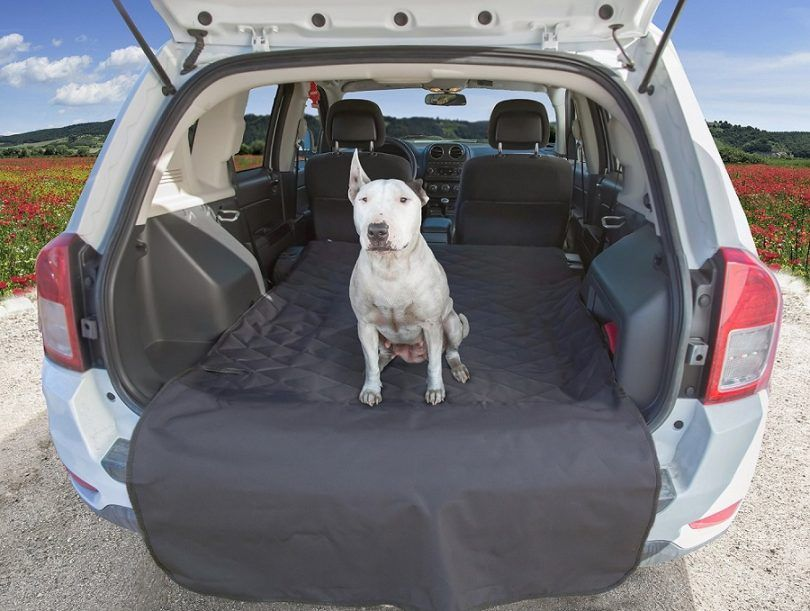 Perro en la parte posterior de una caravana