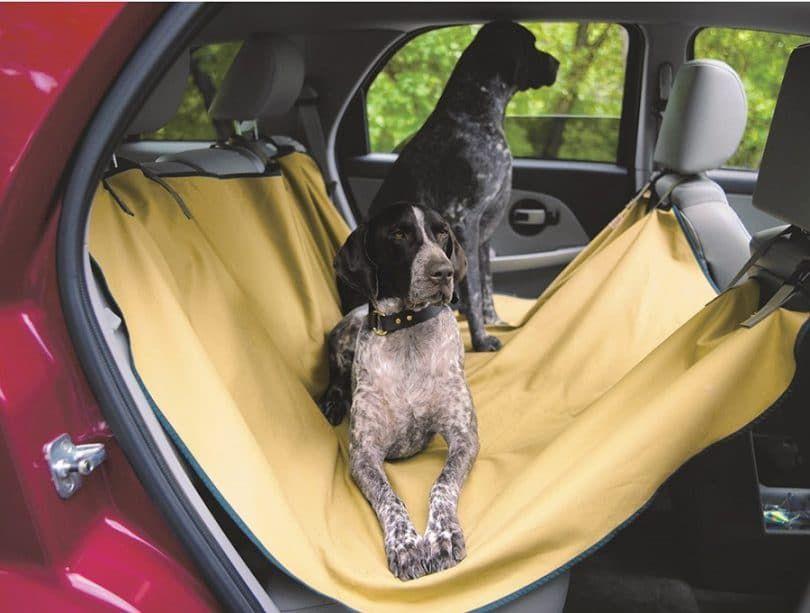Perros en una cubierta