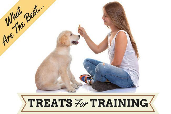 Los mejores golosinas para perros para cachorros o perros de formación