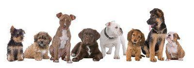 fila de cachorros de diferentes razas