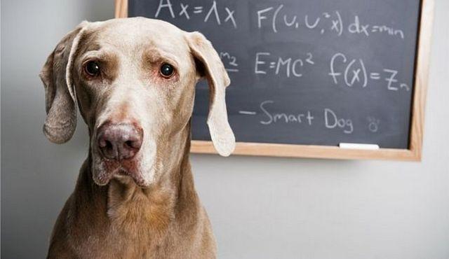 La prueba del índice de inteligencia del perro: medidor fiable, o la diversión torpe?