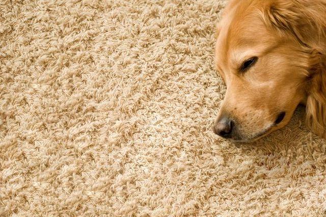 Guía alfombra limpia del dueño del perro