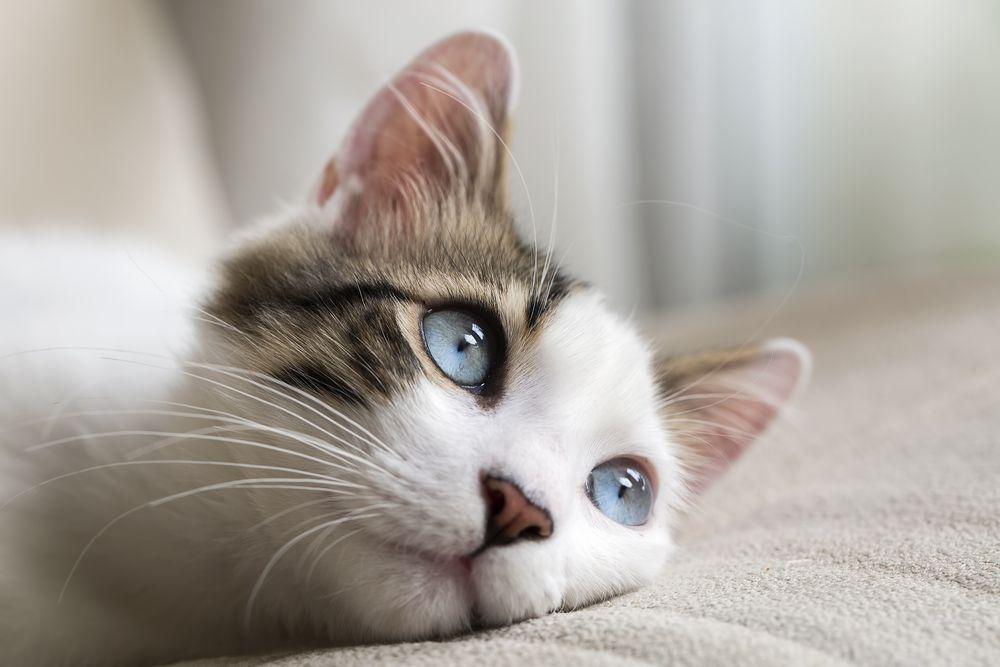 FBI-gato mirada