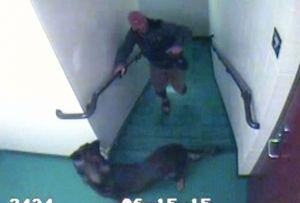 Los titulares que rompió el corazón: ¿dónde están estos perros y sus abusadores ahora?