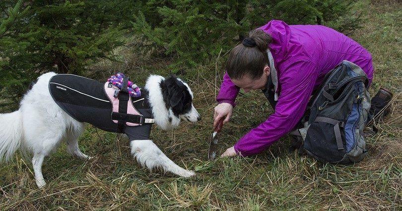 La raza de caza de los perros: los cazadores de mundo canino