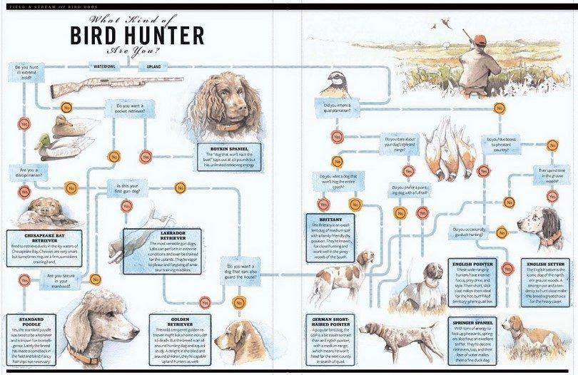 raza de perro cazadores