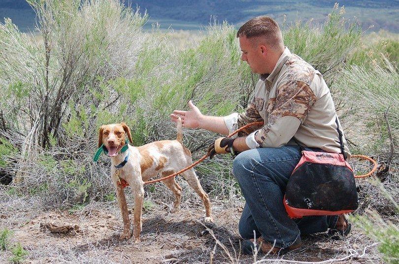 entrenamiento del perro cazador