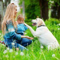 Importancia de la formación de Labrador: Un buen comportamiento con la mujer y la niña