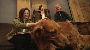 La calle de las tentaciones Animal empresa se especializa en la mГєsica para perros