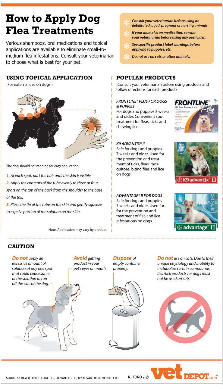 El medicamento más eficaz alergia al perro