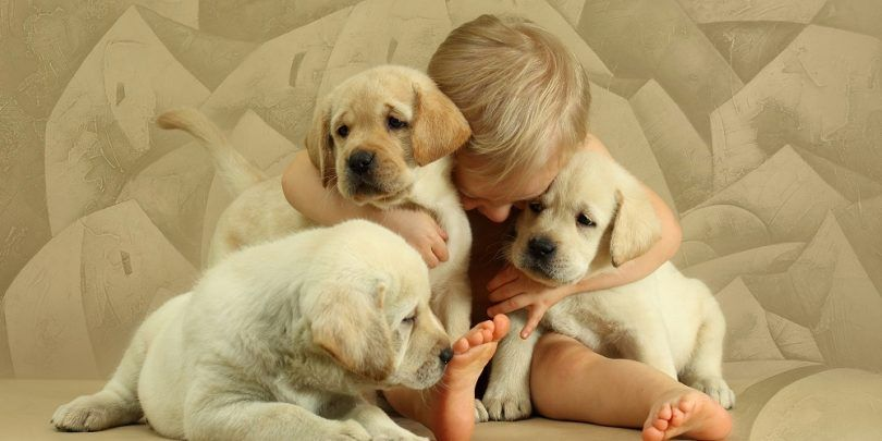 Los perros más amigables: selección de un compañero que es tan agradable como eres