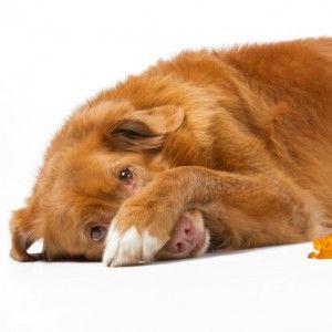La cosa más espantosa que necesita saber sobre el misterio chino desigual mascota