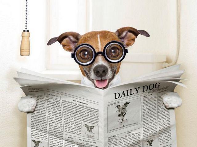 La primicia sobre caca: ¿qué se puede decir acerca de un perro por su doodie