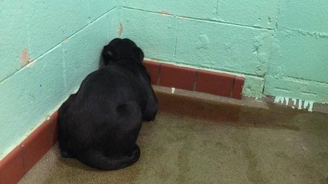 La historia de la foto desgarradora de un perro del refugio deprimida
