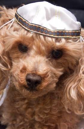 La historia de los perros y pascua