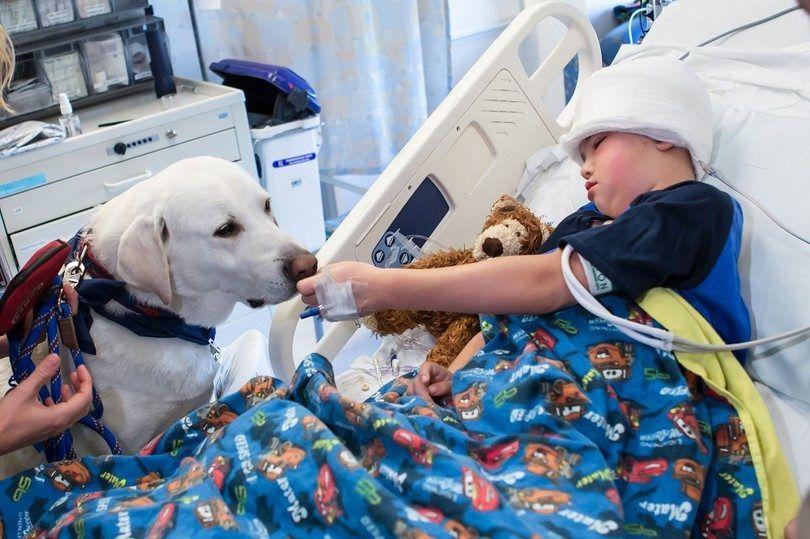 perro de terapia con un niño