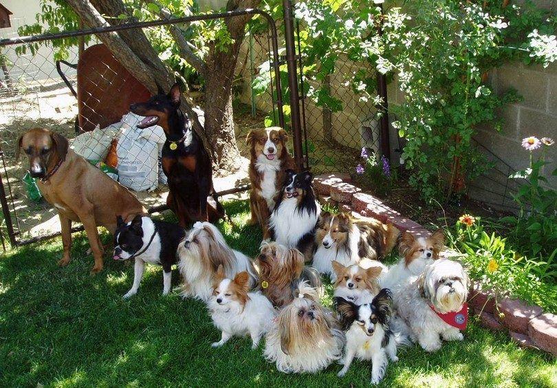 Los perros de terapia en grupo