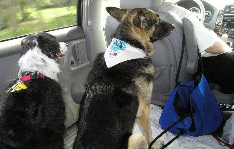 la vida simple con perros de terapia